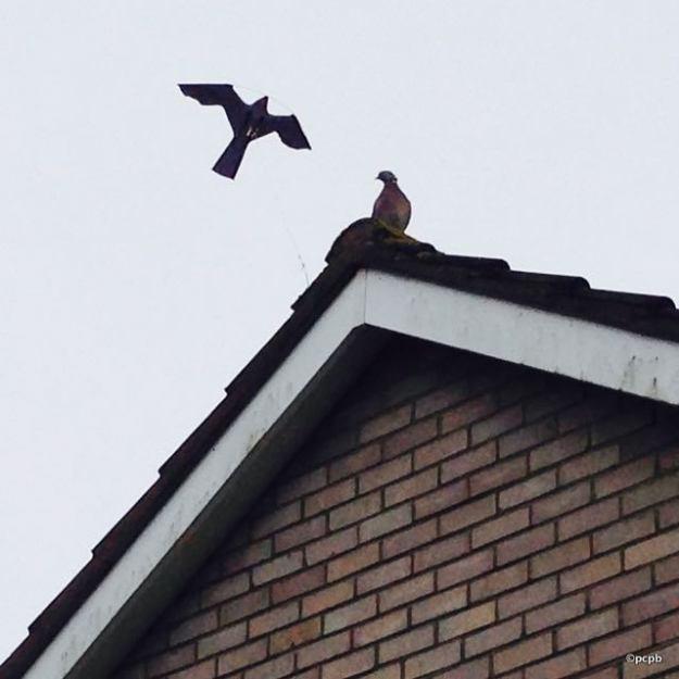 bird scarer - w